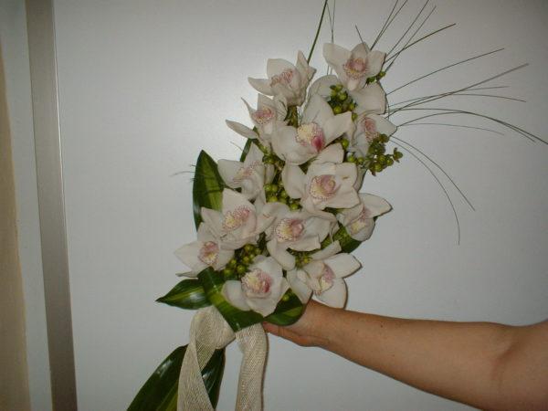 Phalaenopsis-ramo-novia