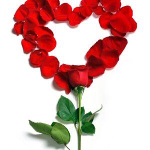 Pétalos de rosas