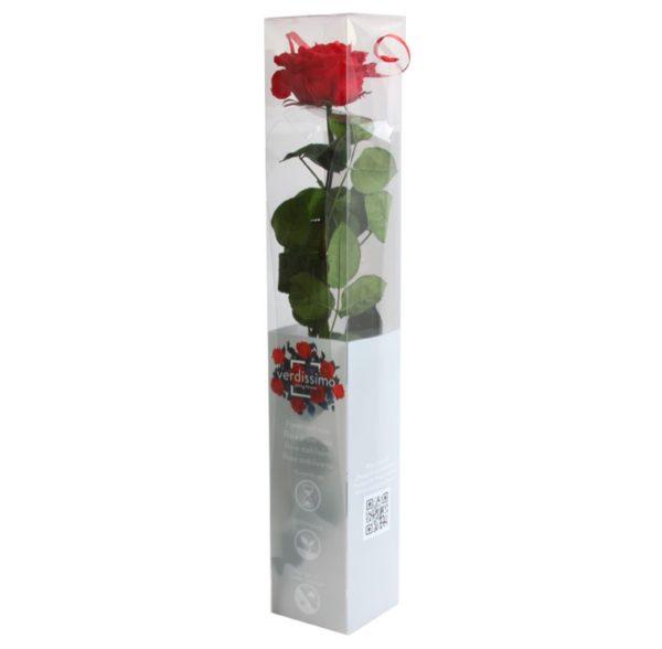 rosa preservada Rosa caja